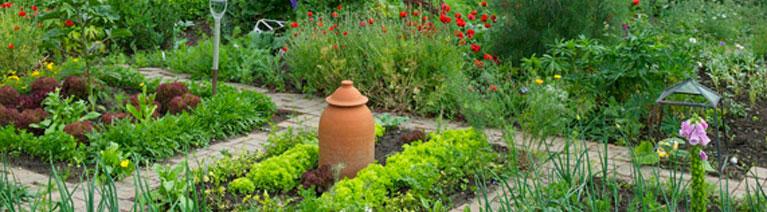 Luty i marzec w ogrodzie - jakie rośliny wysiewać?